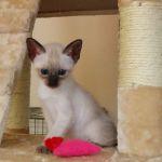 Kitten from Mitzi's first litter.
