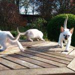 Table Top Kitties.