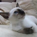 Chintziam Amasis at 11 weeks.
