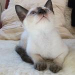 Chintziam Zahra at 11 weeks.
